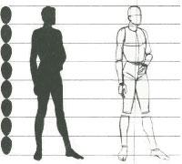 Пропорции человеческого тела