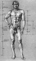 Пропорции мужского тела